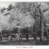 Boc 1909 hanami tokio