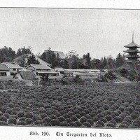 Boc 1909 kyoto teeanbau