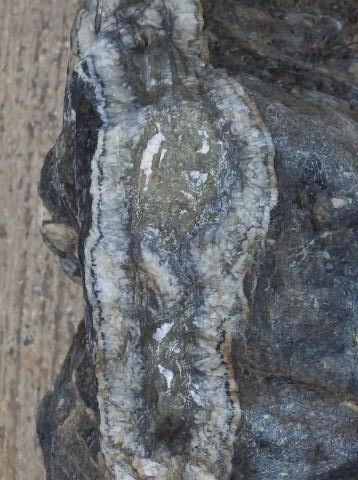 鉱床 スカルン