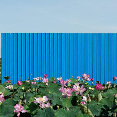 フェンス、あるいは過去と未来の境界線。リム・ソクチャンリナは隆盛著しいカンボジア経済への警鐘を鳴らす_image