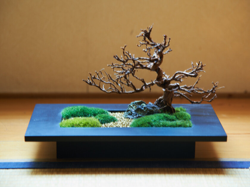 四季を感じるニューインテリア・モダン盆栽の楽しみかた。_image