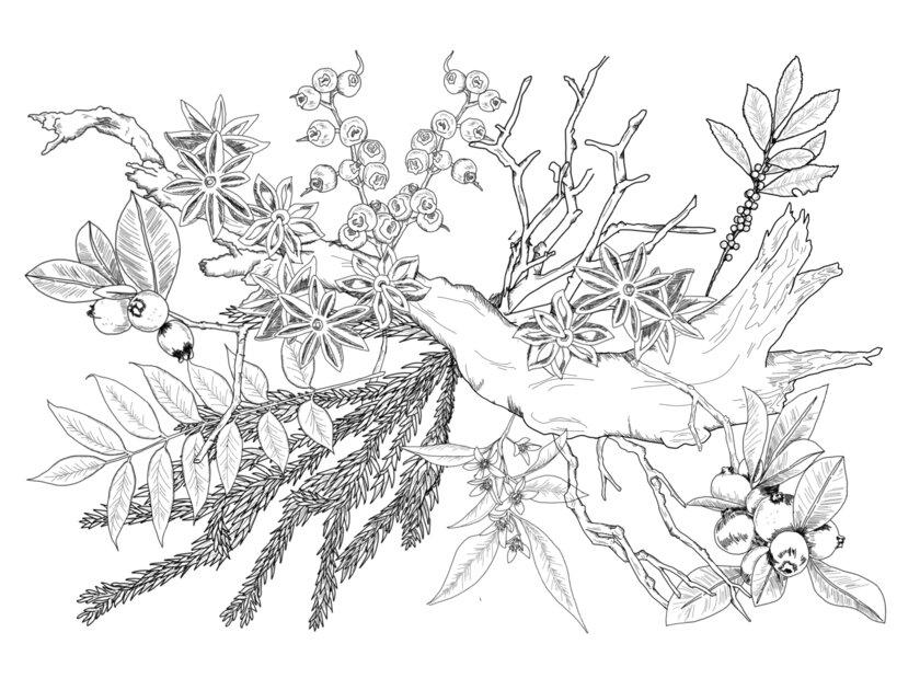 「いま、ウッディな香りが面白い」渡辺佳子×小泉祐貴子 LIVE対談レポート  〜ウッディ系フレグランスの変遷と、いま注目の香りアイテム〜_image