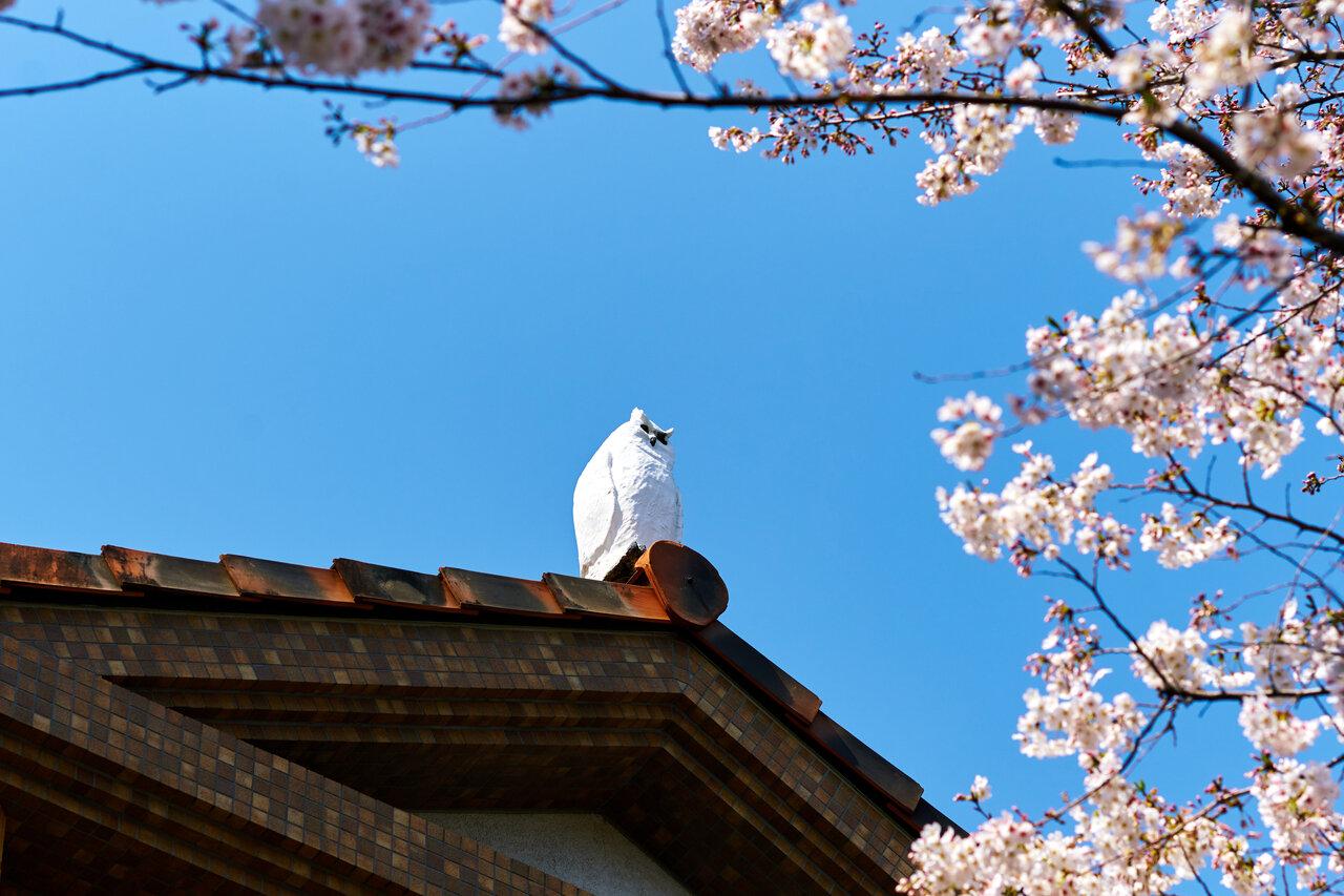 建物のてっぺんには知恵の象徴とされるフクロウのオブジェが鎮座し、出迎えてくれます。(写真:佐々木孝憲)